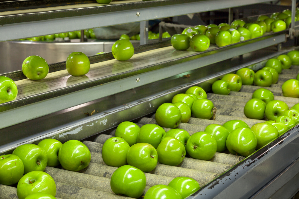Production worker (fruit factory)