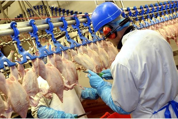 Vešanie kurčiat (továreň na kurčatá)