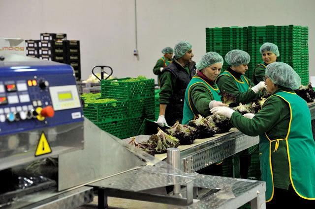 Production worker (fresh salad)