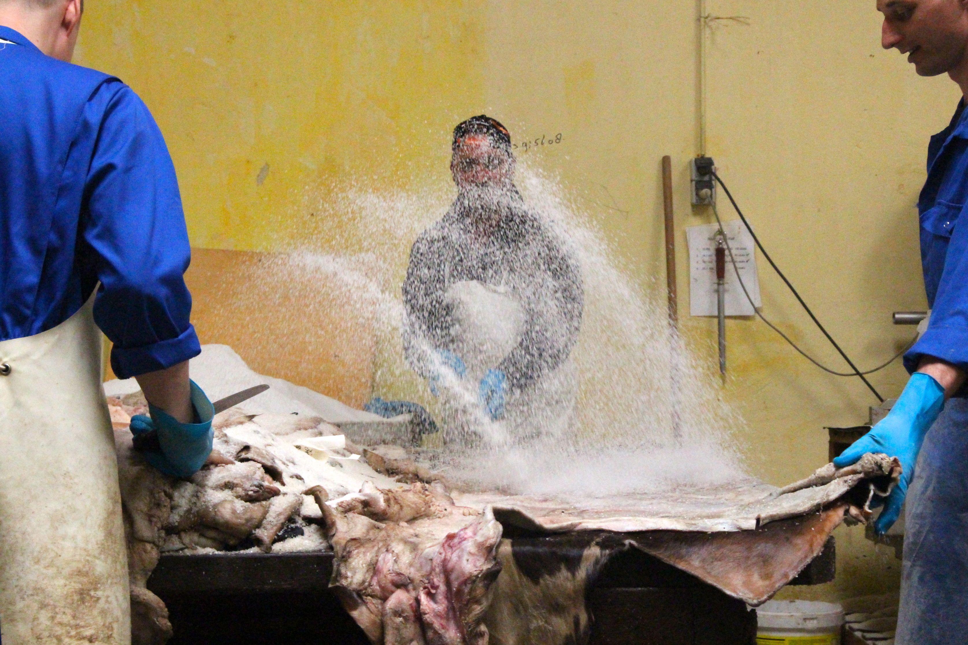 Karvių odos apdirbimo įmonės darbuotojas