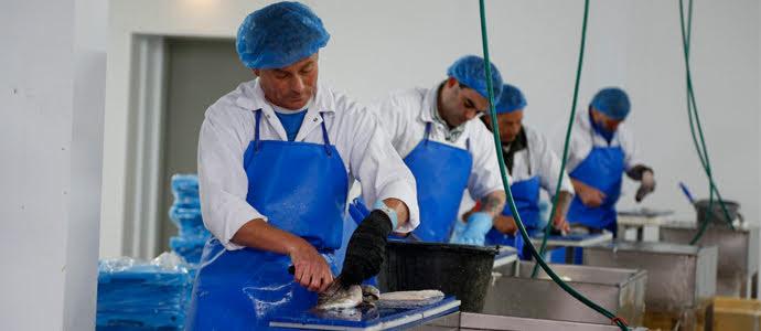 Gyári munkás -tenger gyümölcs feldolgozás ( csak saját autóval)