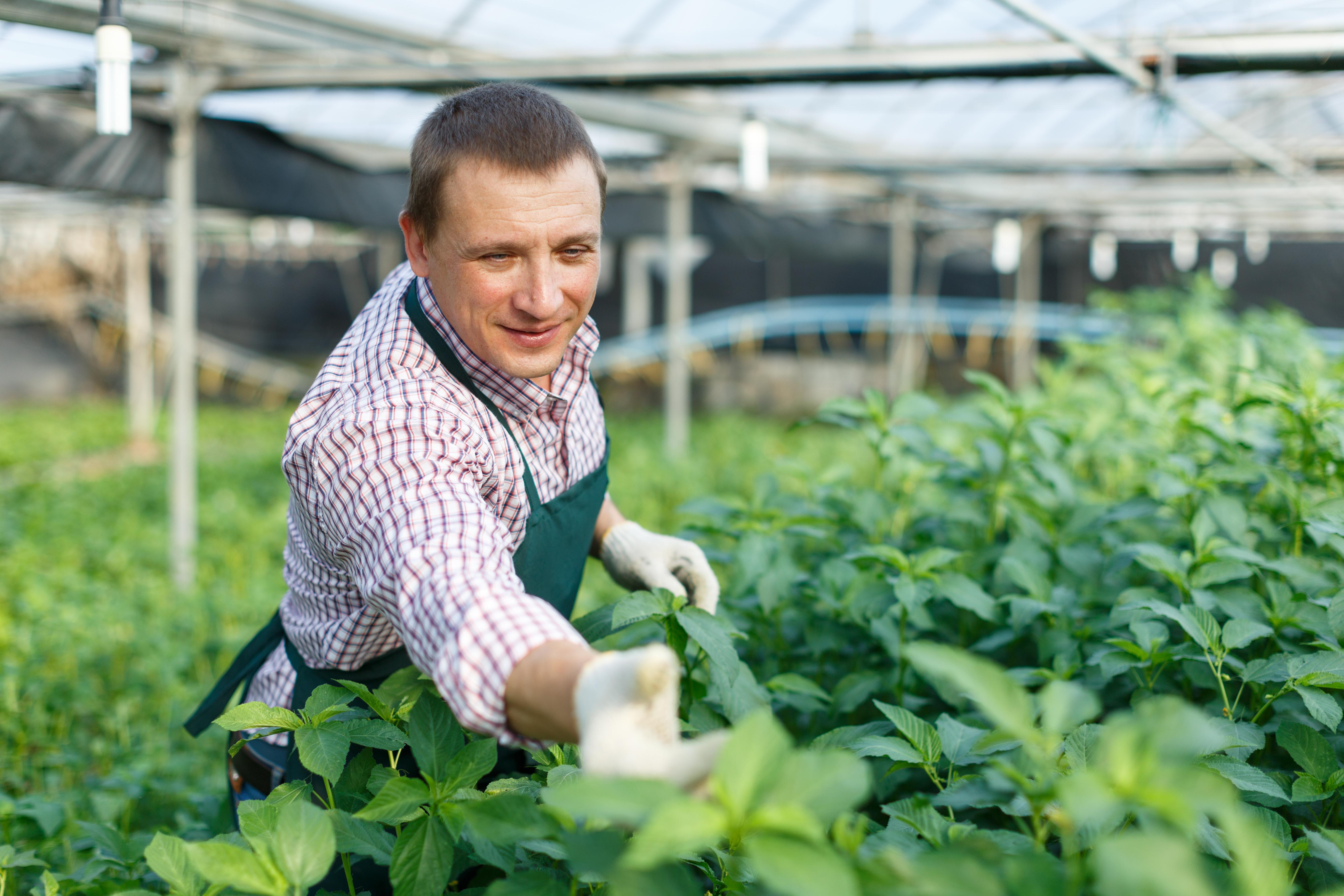 Lucrator agricultura